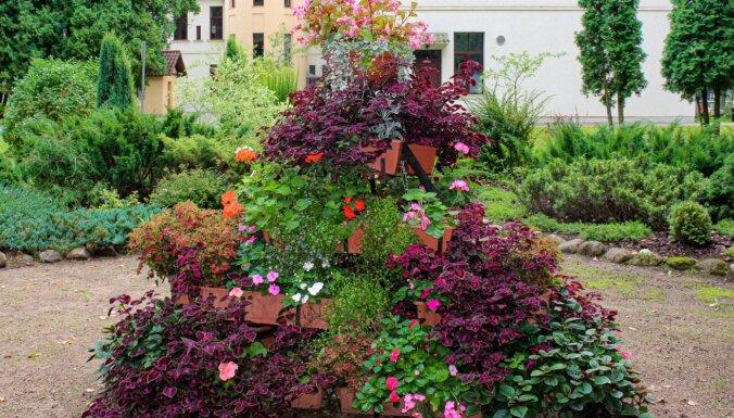 Pašiem sava puķu 'saule' – Kauguru pamatskolas krāšņais dārzs
