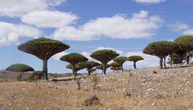 Sokotra - sala Indijas okeānā, kur izskatās kā uz citas planētas