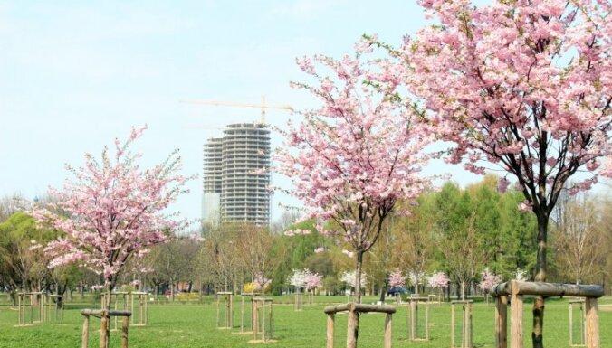 24 апреля: вид на жительство, проект ЦРУ и совет Лембергса