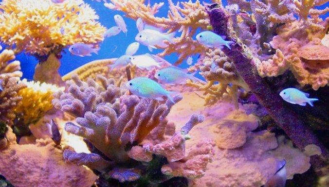 Австралия создаст крупнейший в мире морской заповедник