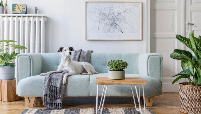 Septiņi veidi, kā māju padarīt gaišāku bez remonta