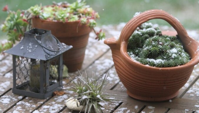 Tautas padomi, ar ko piesegt dārza augus