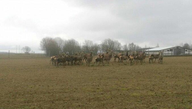 Идея для однодневной поездки: болотная тропа в Литве, возле границы с Латвией