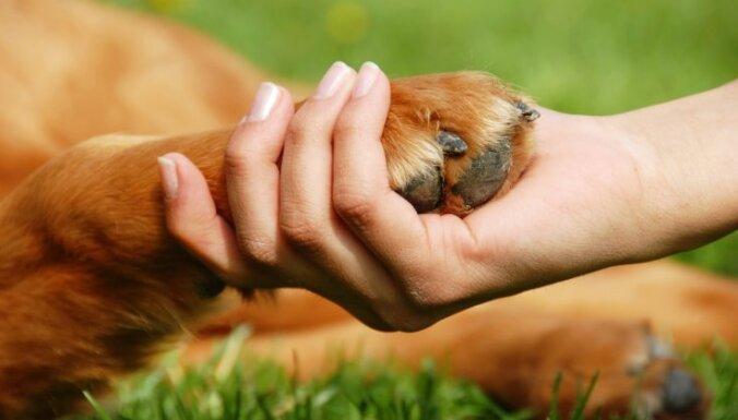 Агрессивный мужчина жестоко избил в магазине свою собаку: животное погибло