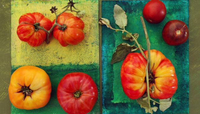 Kā audzēt tomātus