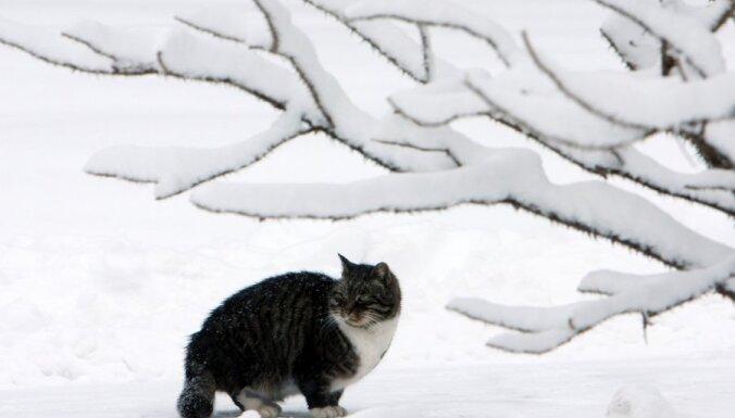 На будущей неделе — усиление ветра и снегопад