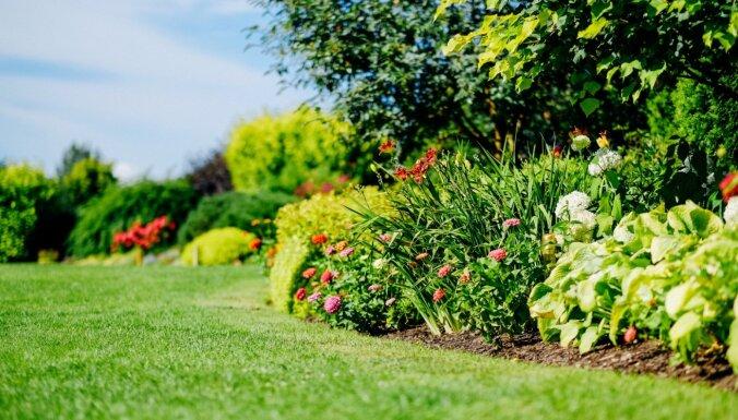 Dārza kursi maijā: noderīgas lekcijas un profesionāli kursi
