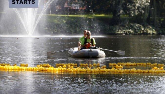Foto: Rīgas kanālā noticis 'Pīļu skrējiens' vīriešu veselības atbalstam