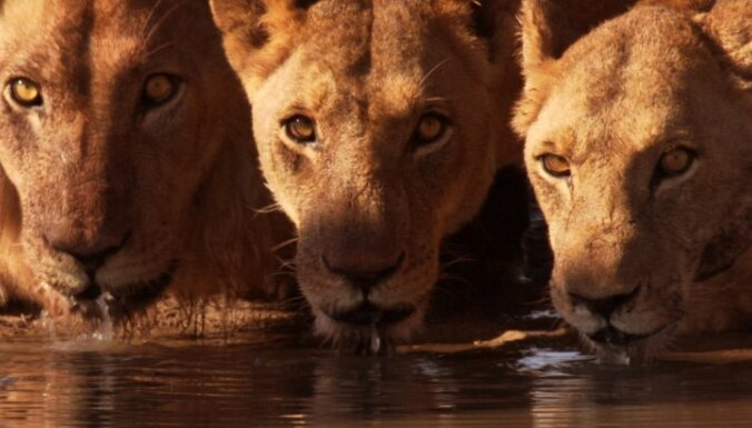 В Ботсване запретили сафари после охоты короля Испании