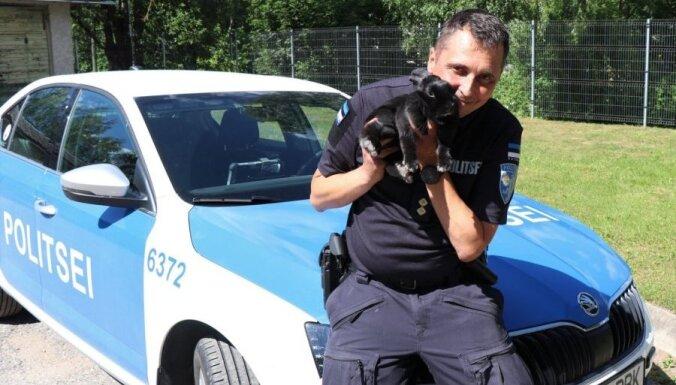 ФОТО: В Эстонии работает самый милый полицейский — кролик Юссь! Что входит в его обязанности?
