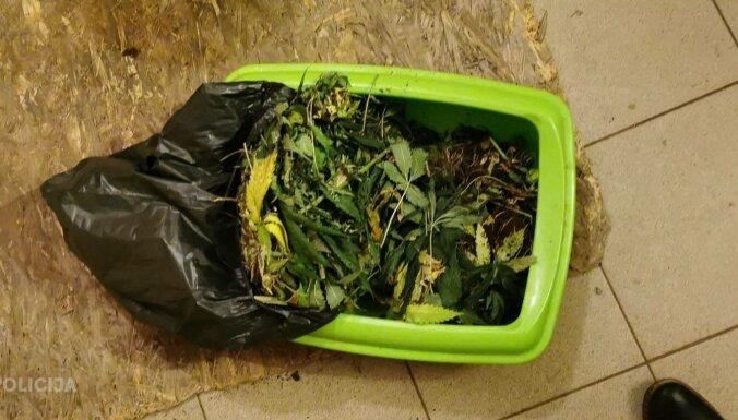 ФОТО. Во время обыска полиция нашла плантацию марихуаны и изъяла оружие