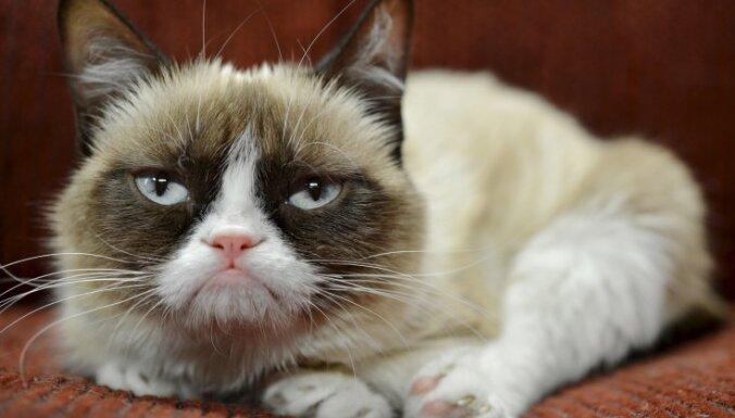 Самые известные коты Интернета снялись в рождественском клипе