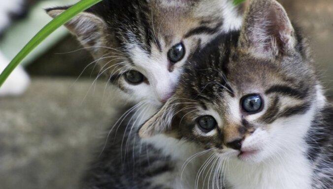 ВИДЕО: Коты Гудини. Хитрые питомцы напугали хозяйку, но все можно объяснить