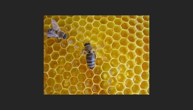 Medus un bites. Foto: Agnieszka Mac