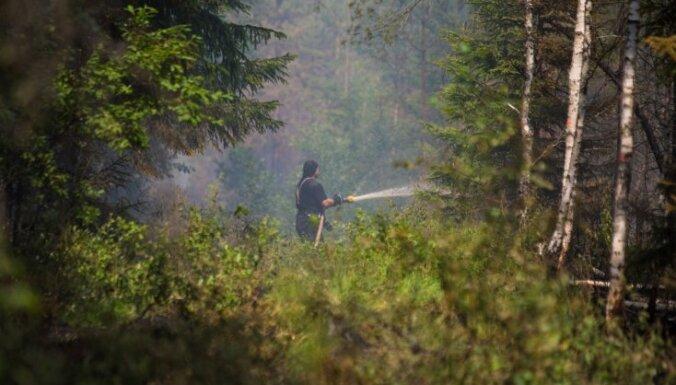Возбуждено уголовное дело о поджоге в районе лесного пожара под Талси