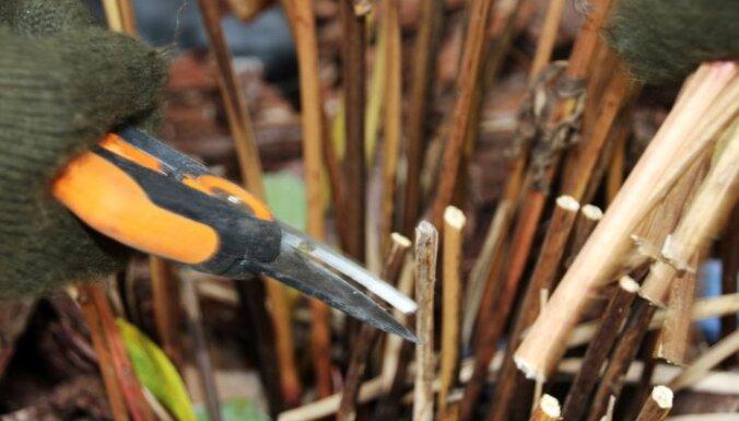 Dārza šķēres rudens sezonā – kādiem darbiem tās lietderīgi izmantot