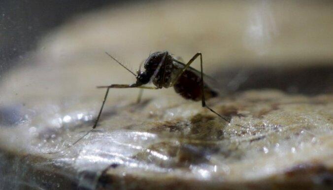 ASV konstatēti pirmie inficēšanās gadījumi ar Zikas vīrusu no vietējiem odiem