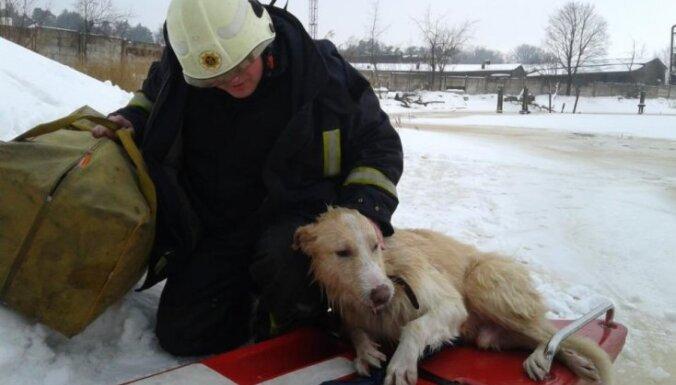 VUGD Juglas kanālā izglābj suni no noslīkšanas
