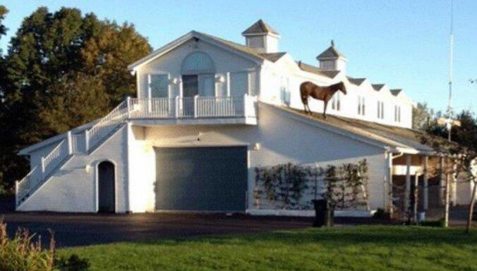 Garlaikots zirgs uzkāpj uz mājas jumta