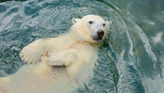 Арктический совет возглавила Россия