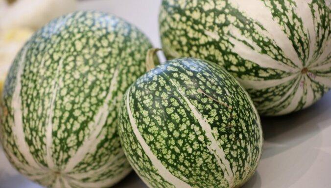 ФОТО. Тыквы и другие большие ягоды - в Латвийском Музее природы проходит главная выставка осени