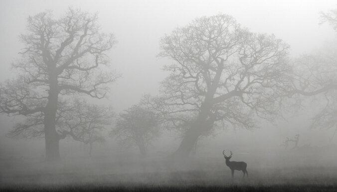 В ночь на воскресенье местами ожидается туман
