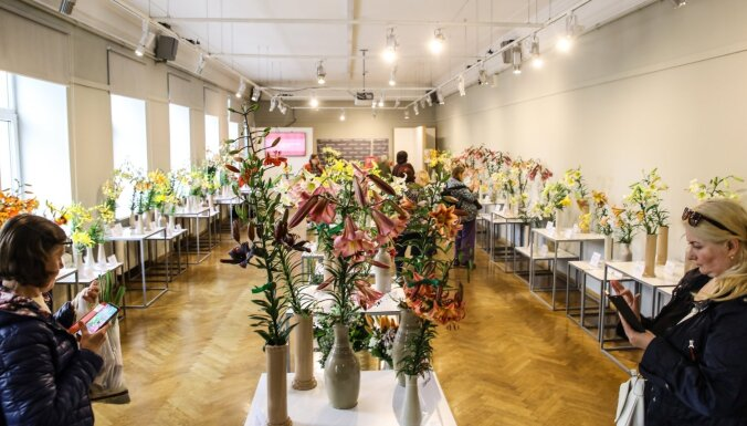 Foto: Vairāk nekā 200 liliju šķirnes Latvijas Dabas muzejā