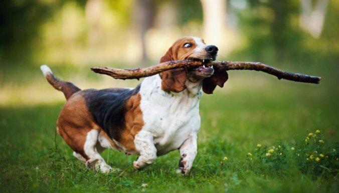 Гав-гав? 10 самых глупых пород собак