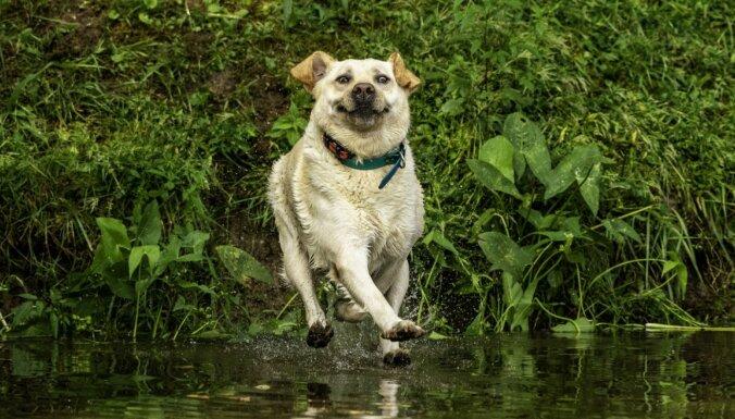 Foto: Amizantos kadros iemūžināta dzīvnieku pasaule