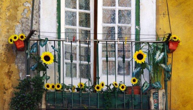 Lodžija vai balkons - kā ziedošs dārzs
