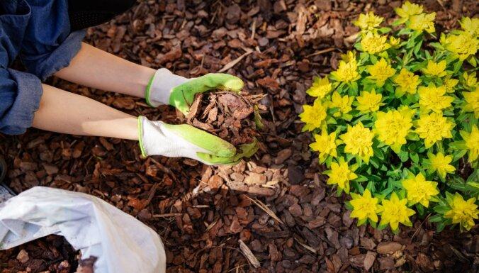 Dārza mulčēšana: kādu materiālu izvēlēties un kā pareizi ieklāt