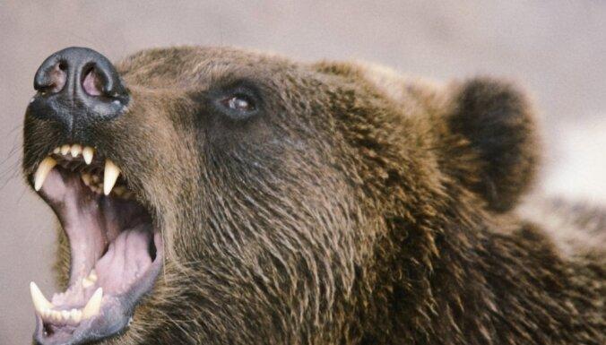 В Томске медведь откусил руку посетительнице шашлычной