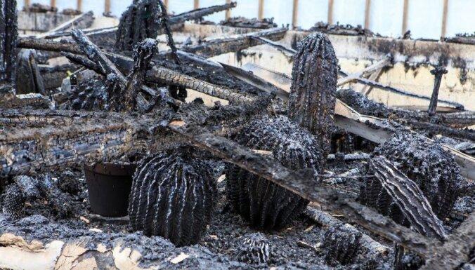Foto: Igaunijā sadegusi unikāla kaktusu kolekcija
