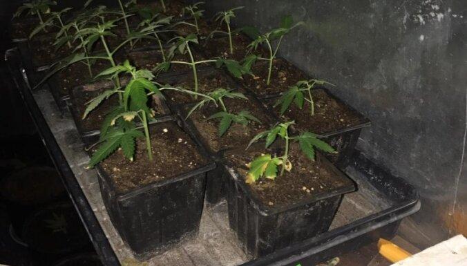 """Грабители в масках избили владельца """"плантации"""" марихуаны"""