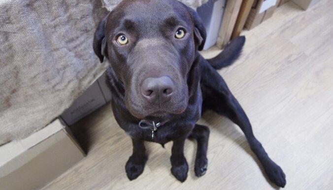 Kas ir suņu alus un vai tas nav kaitīgs mīlulim?