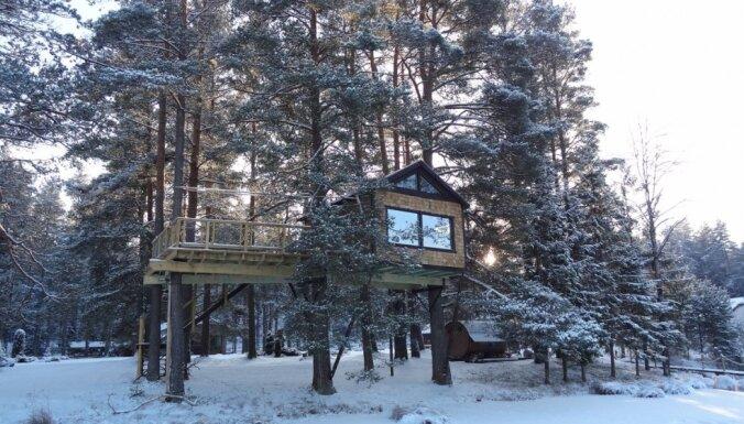 Fantastiska koka māja Cēsu pusē piecus metrus virs zemes