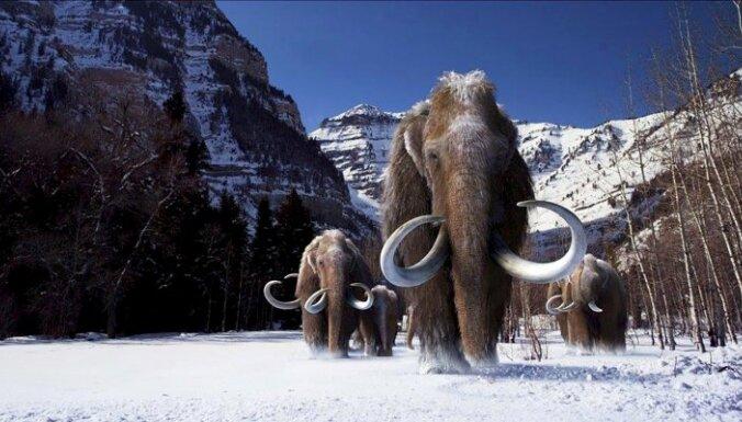 Оживить мамонтов. Ученые из США пытаются вернуть на Землю животных, вымерших тысячи лет назад