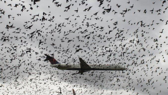 В России самолеты все чаще сталкиваются с птицами. Что происходит?