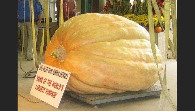 ķirbis, pumpkin