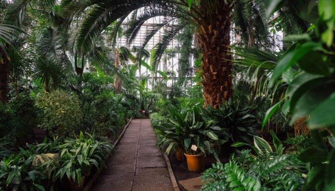 Botānisko dārzu augu mājas varēs apmeklēt ar vakcinācijas vai pārslimošanas sertifikātu