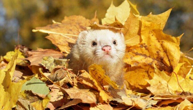Jaunākā prognoze: Novembra sākums solās būt saulaināks un siltāks