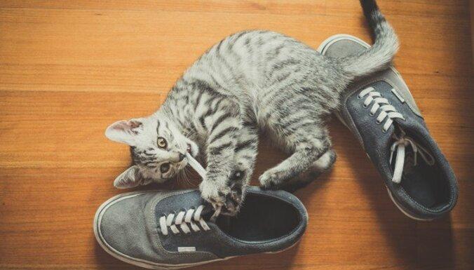 Шаг за шагом: идеи самодельных игрушек для кошки!
