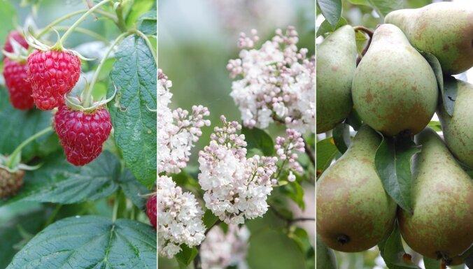 Dārzos augošo bagātību krātuve – ģenētiskie resursi. Kā un kur tā tiek saglabāta