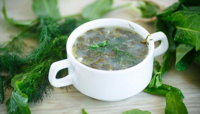 Рецепты блюд из щавеля