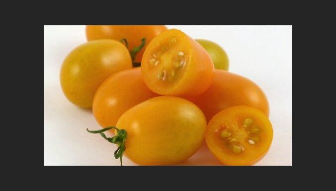Sējas darbiem gatavs: plūmju tomātu un ķirštomātu šķirņu saraksts