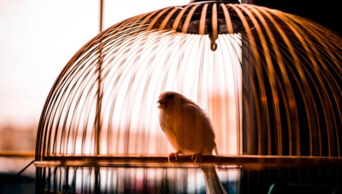 9 bijušo vīru atziņas: ko es būtu gribējis zināt pirms laulības šķiršanas