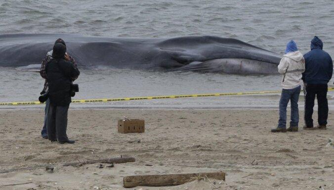 Выбросившийся на берег в Нью-Йорке кит скончался