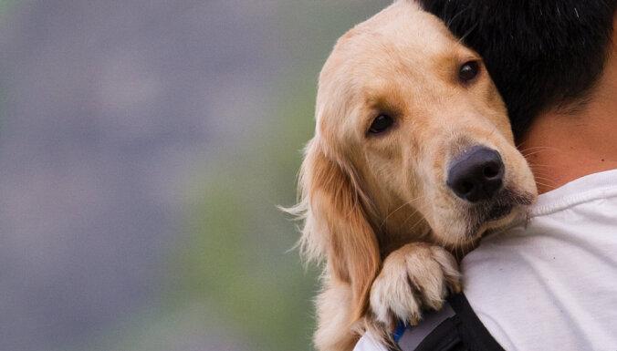 10 фактов о собаках и кошках, которые вы не знали
