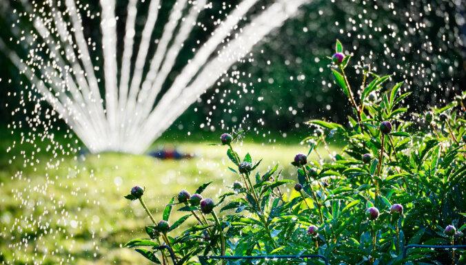 Augu mēslošana un laistīšana – padomi dārza darbiem karstajā laikā