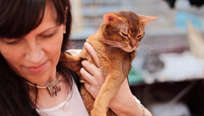 Mazie 'pumas' Abesīnijas kaķi: stāsts par īpašo runčuku Ferus-Ra